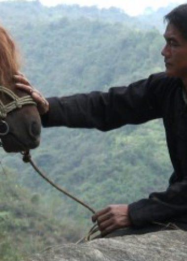 Logo de la page Toa, cavalier hmong
